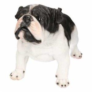 Decoratief beeld van een zwart witte Engelse bulldog