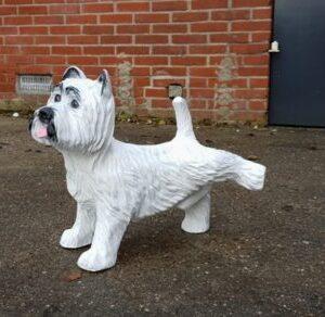 Vrolijke beelden van een West Highland white terrier