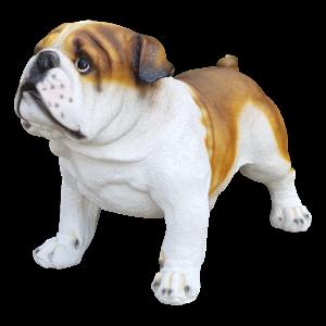 Levensecht beeld van een bruine engelse bulldog