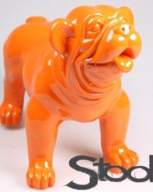 XL beeld van een oranje engelse bulldog pup