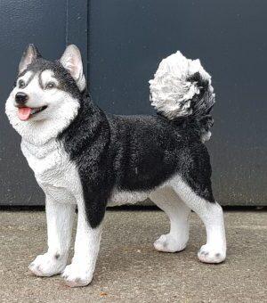 Polyester, polystone en kunststof beeldje van een husky