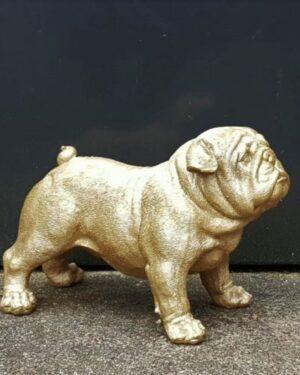 Engelse bulldog beeld goud