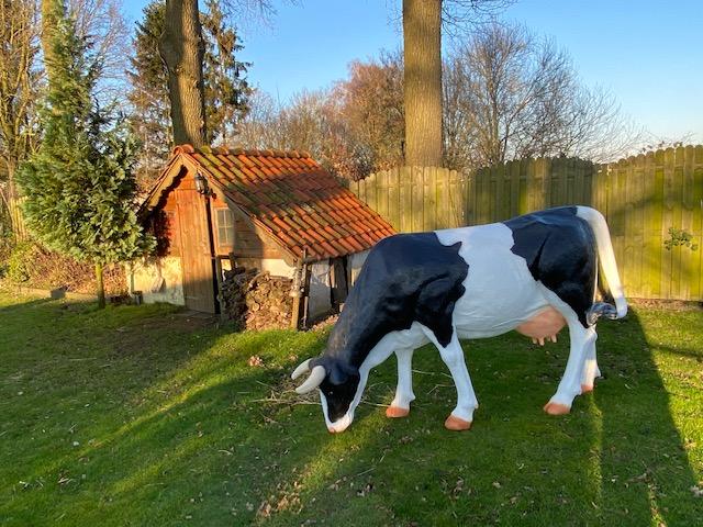 Polyester beeld van in grazende koe kopen bij Vrolijkebeelden.nl