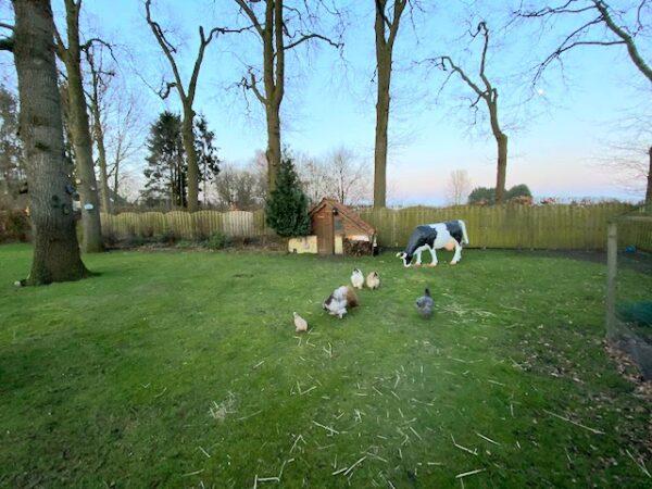 Grazende koe van kunststof als mooi groot tuinbeeld