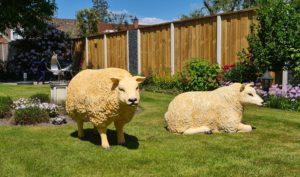 Beelden polyester schapen Texel schapen in de tuin