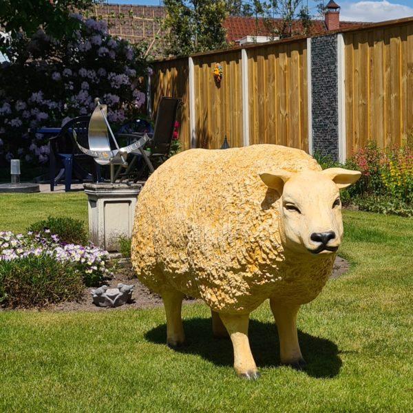Levensecht beeld van een Texels schaap kopen voor buiten