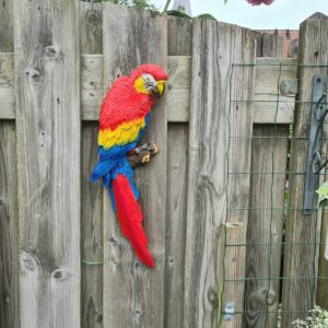 Beeld papegaai vogel in tuin roodstaart Ara
