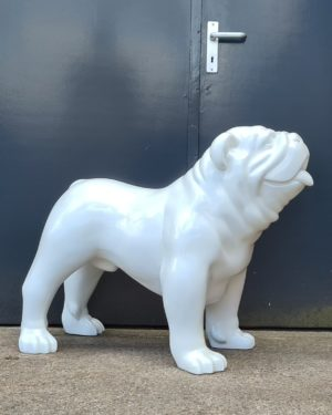 Polyester bulldog beeld bulleke belgie beelden kopen