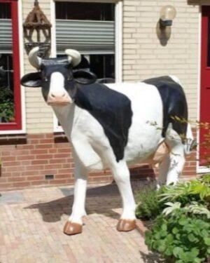 Beeld kunst koe. Ployester dieren beelden koeien